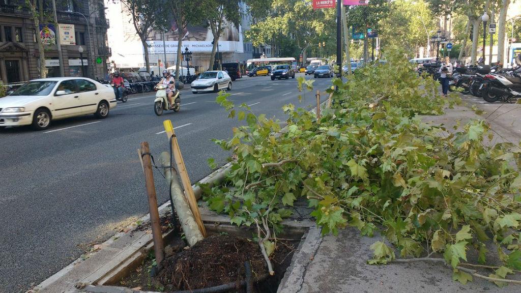 arbre caigut tempesta