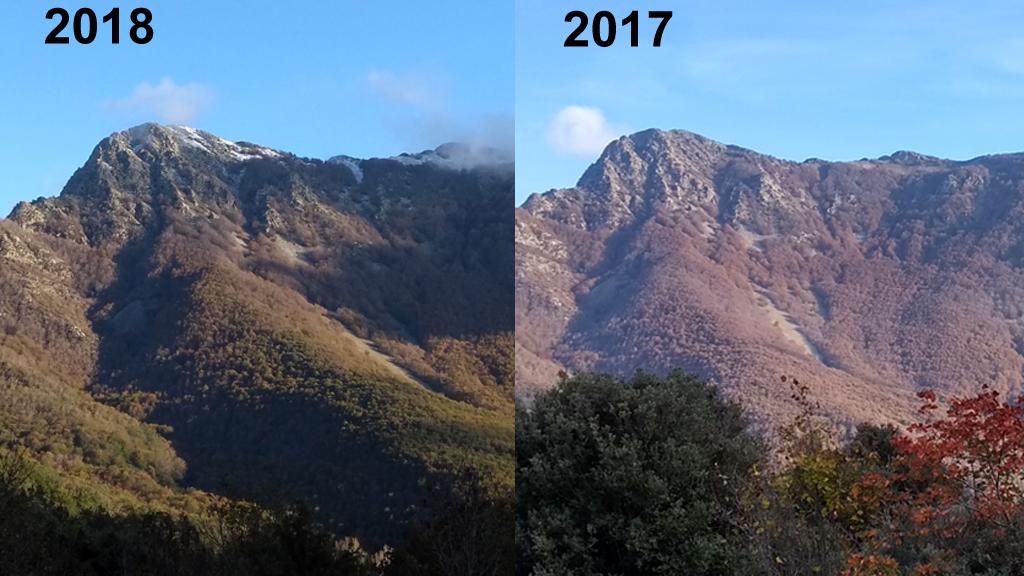 Imatge comparativa fagedes Montseny