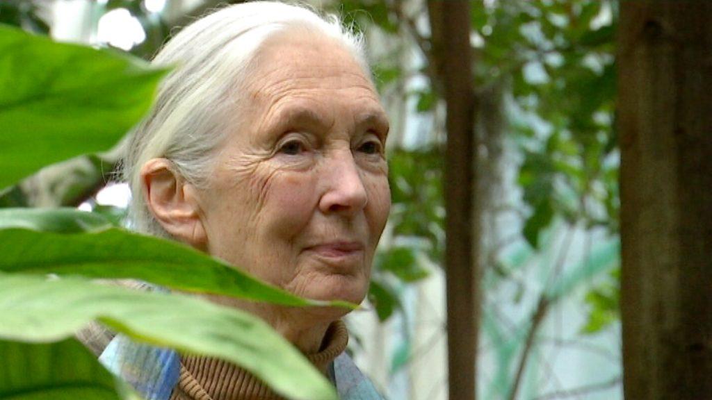 Jane Goodall CosmoCaixa