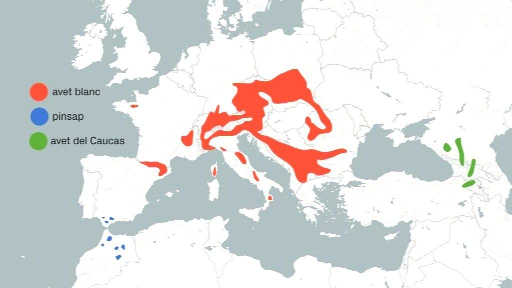 mapa de distribució de l'avet blanc