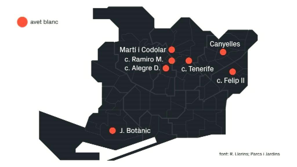 mapa localització avet blanc
