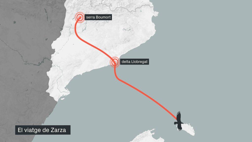 mapa recorregut del voltor Zarza