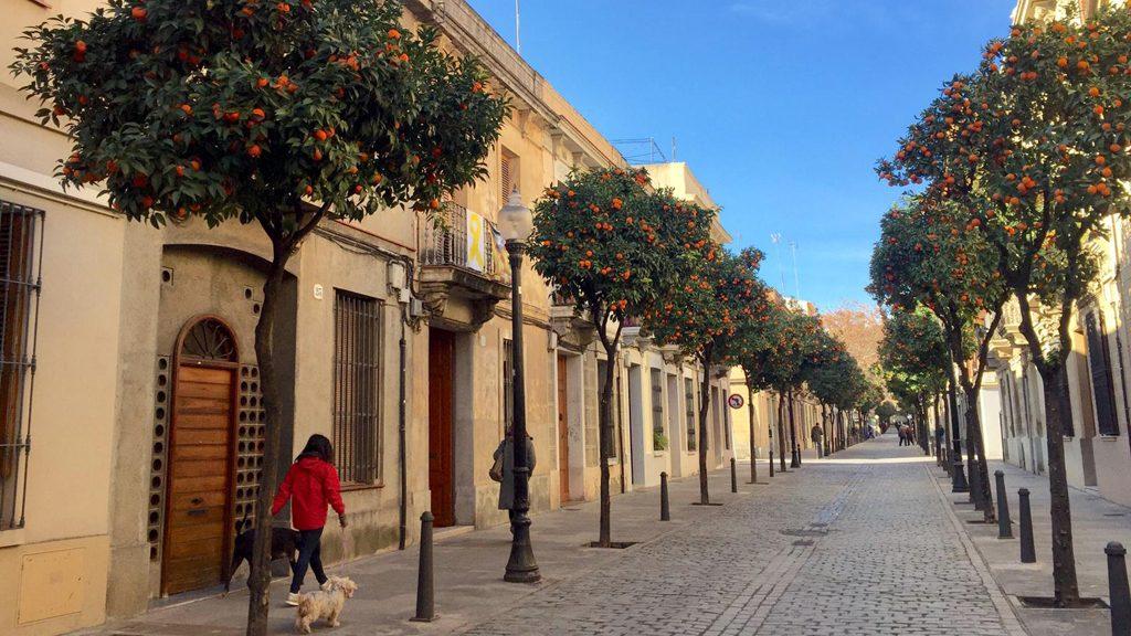 tarongers a Sant Andreu