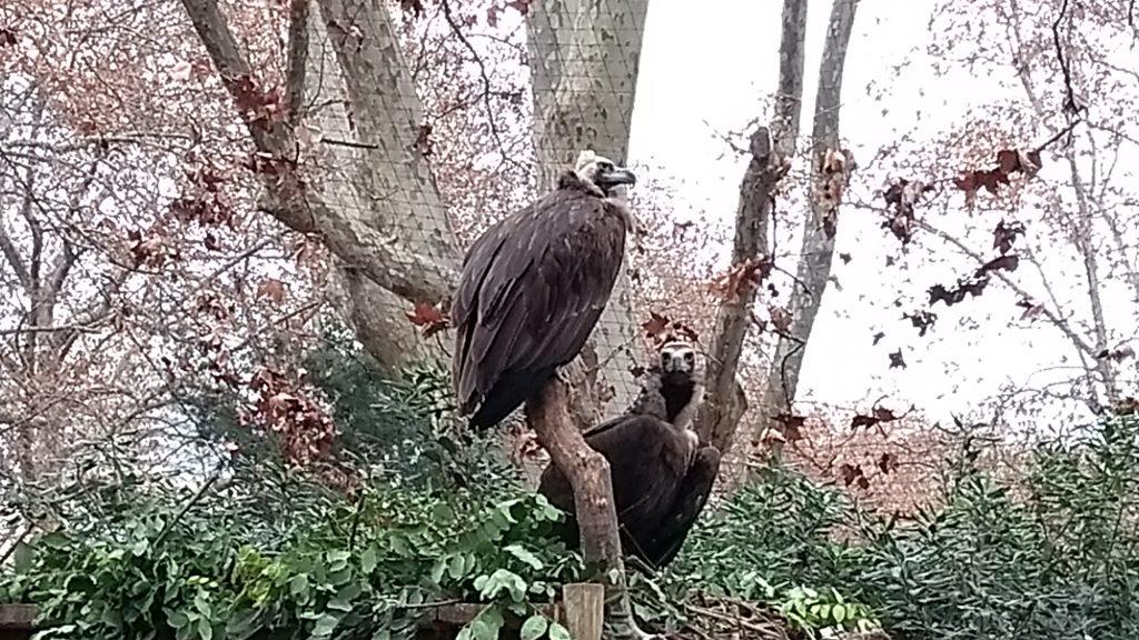 voltors al zoo