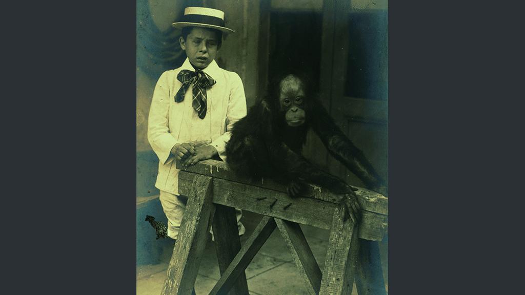 1024x576_0007_1900 1910 ximpanze del zoo jugant amb un nen
