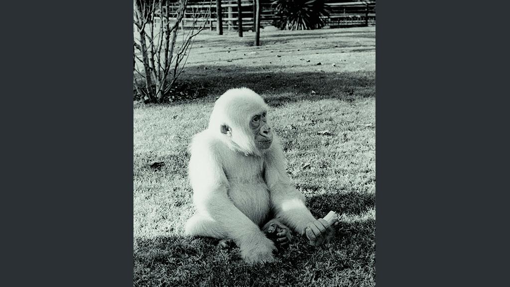 1024x576_0025_1966 Floquet de Neu arribat al Zoo