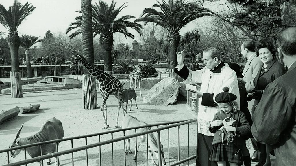 1024x576_0026_1965 Benediccio dels animals del zoo