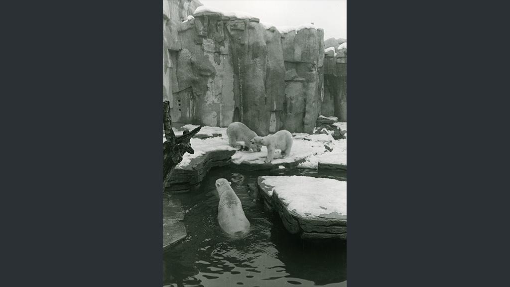 1024x576_0028_1962 Nevada a Barcelona ossos al zoo el dia de Nadal.