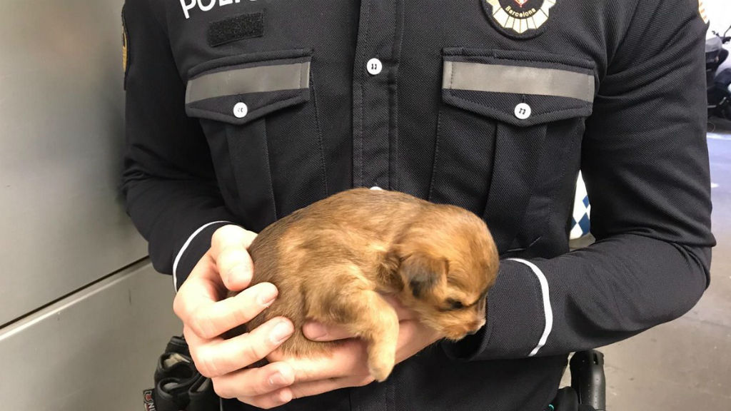 gos cadell guàrdia urbana