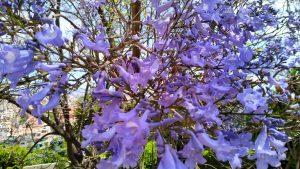 flors xicranda
