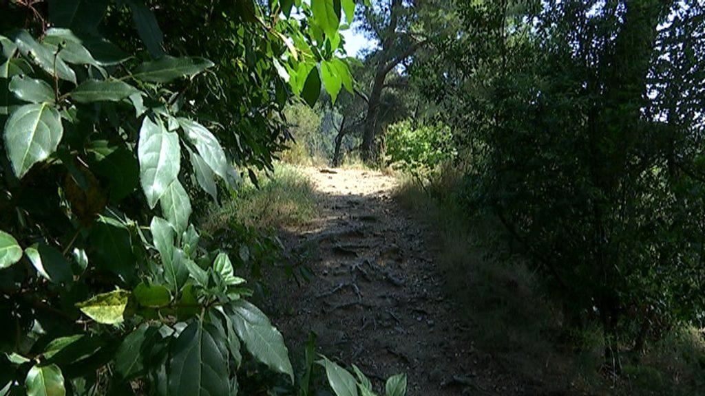 Corriol al Parc Natural de Collserola