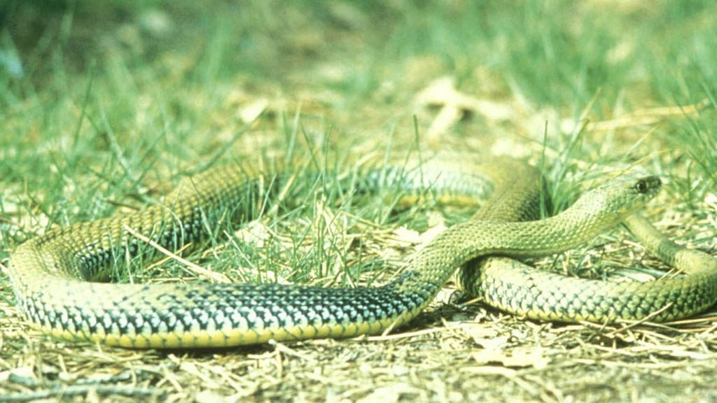 serp verda arxiu fotografic PN Collserola