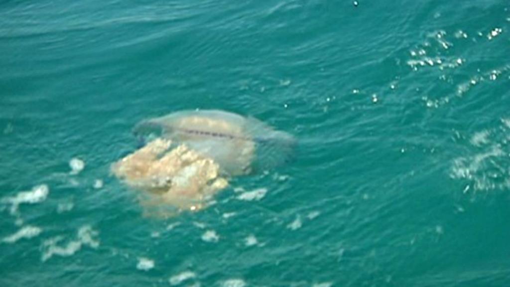 Medusa a la platja