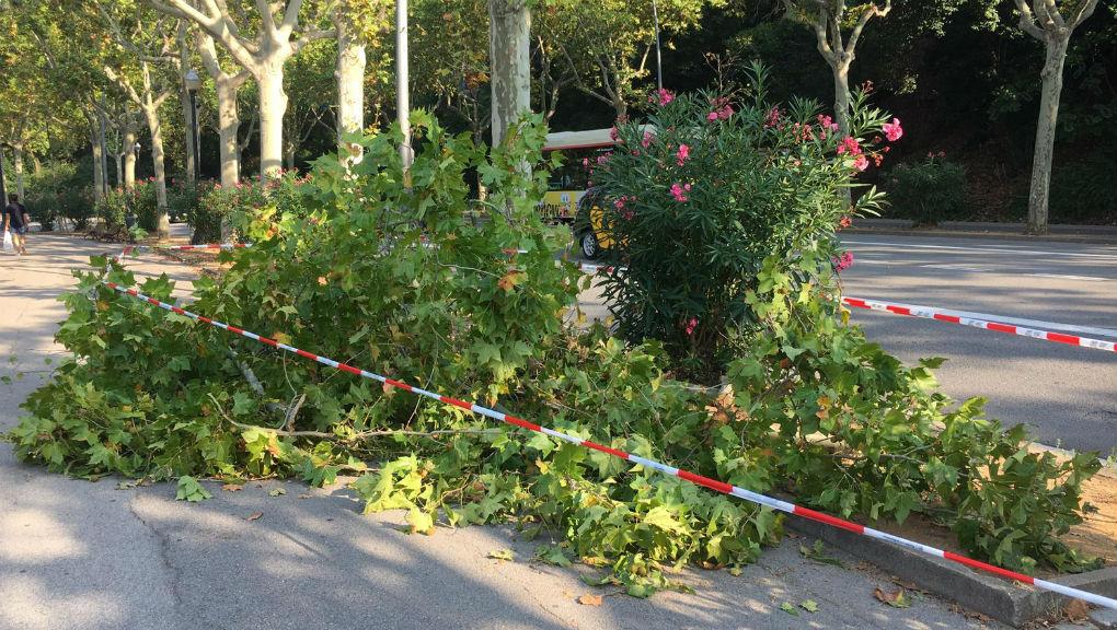 arbre caigut avinguda ferrer i guardia