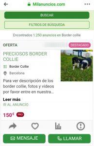 Anunci venda gossos internet