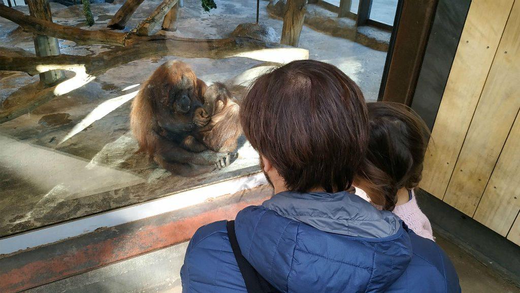 Detall instal·lacions orangutans