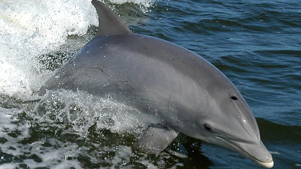 dofins barcelona