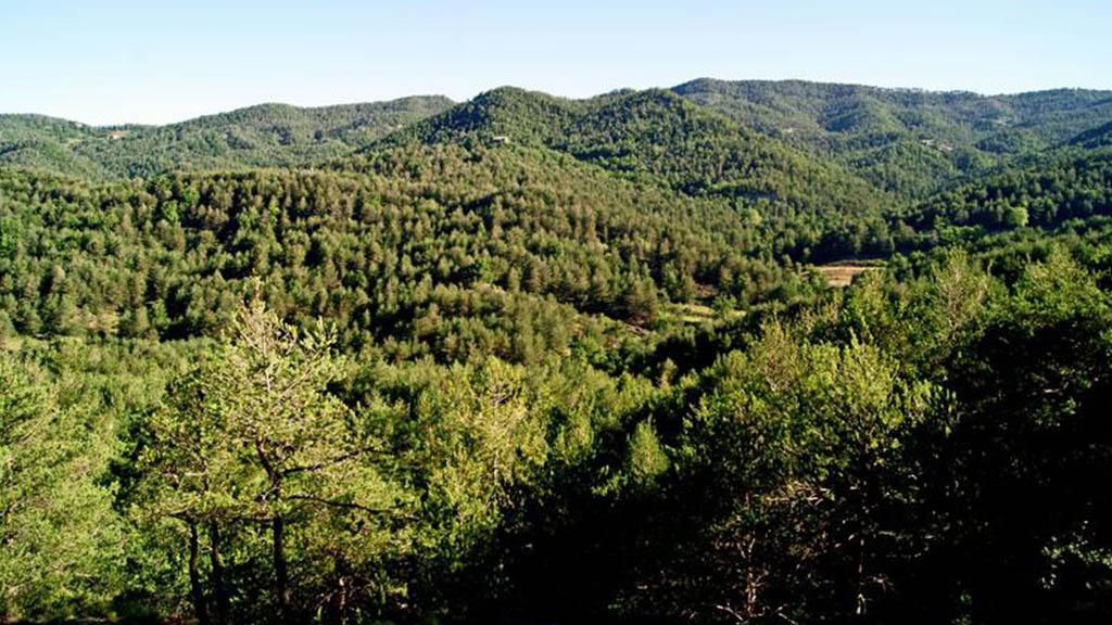 boscos catalans menys co2