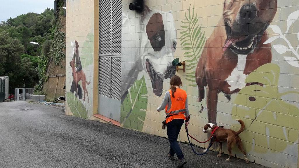 Voluntària passejant un gos del Centre d'Acollida d'Animals de Companyia de Barcelona