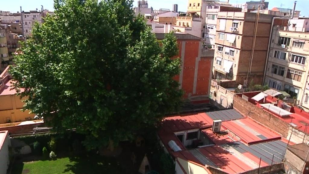 plataner interior illa Gràcia