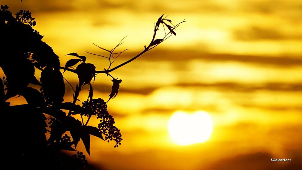 sol estiu