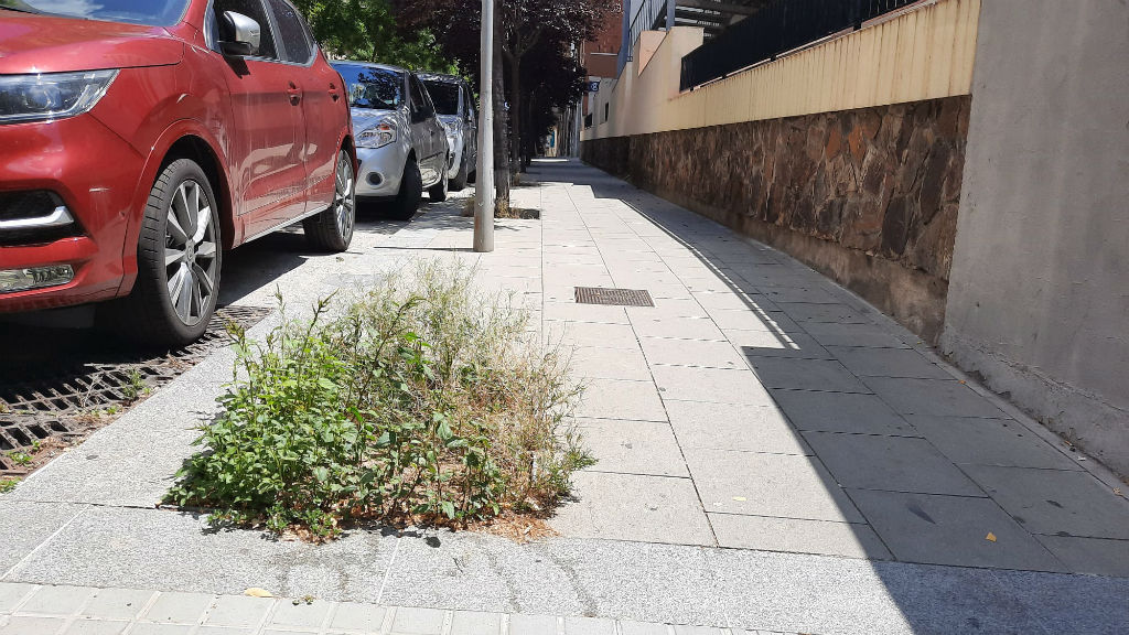 Imatge enviada per Junts x Catalunya per mostrar la deixadesa en el manteniment del verd a Barcelona