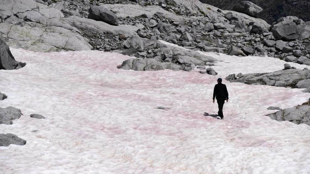 glacera color rosa