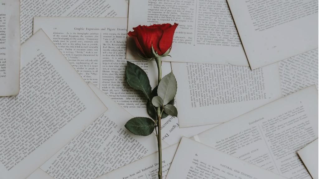 rosa i llibre sant jordi