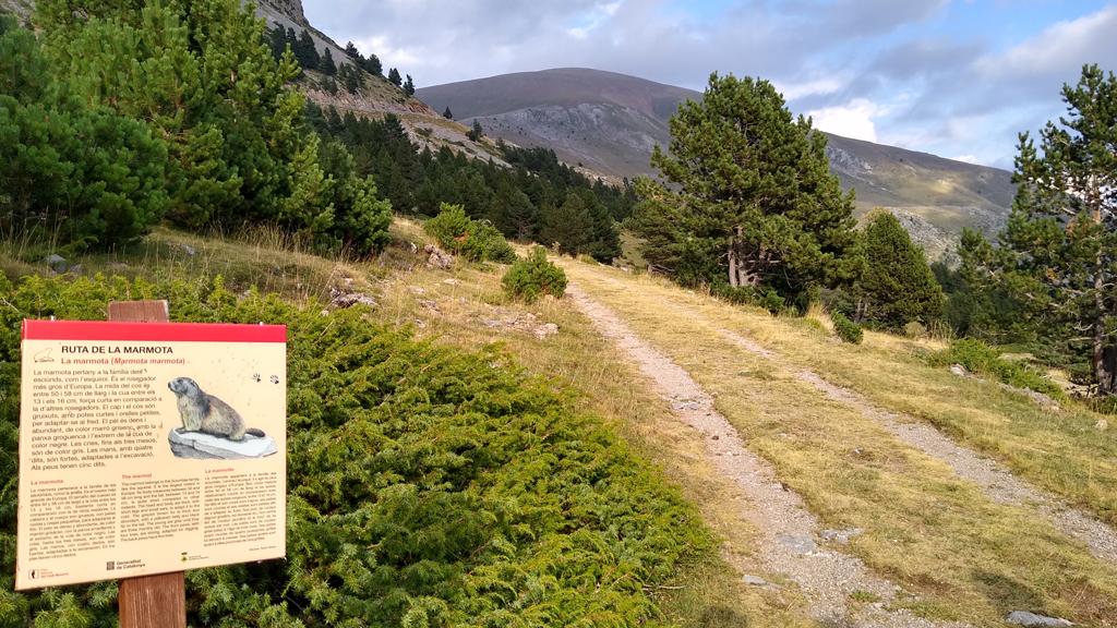 ruta marmotes