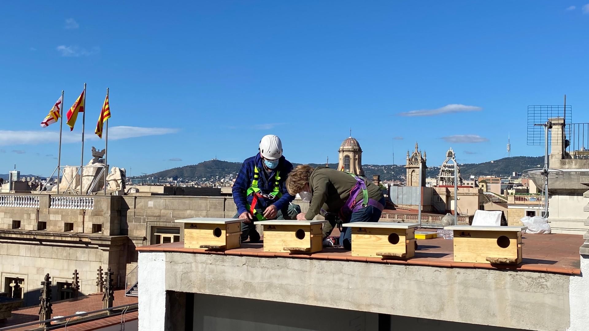 caixes niu terrat