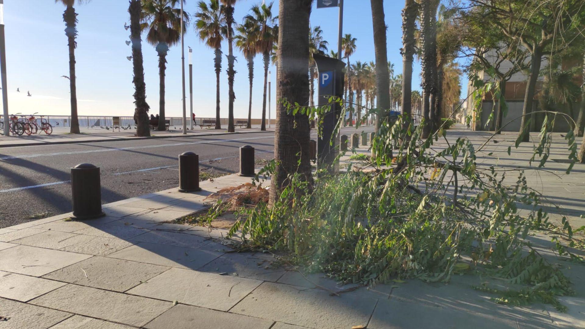 arbre caigut pel vent