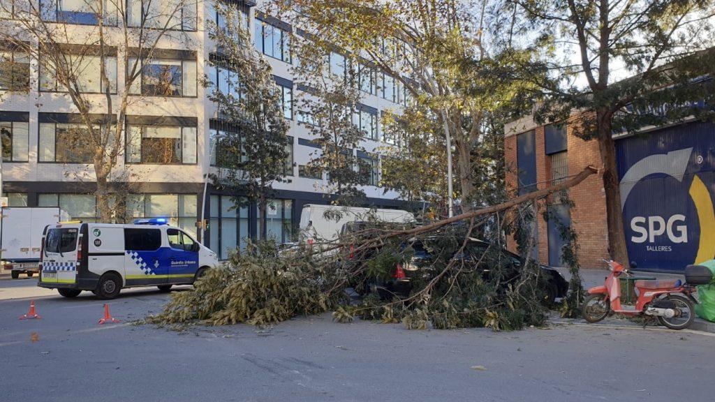 vent arbre caigut sant marti