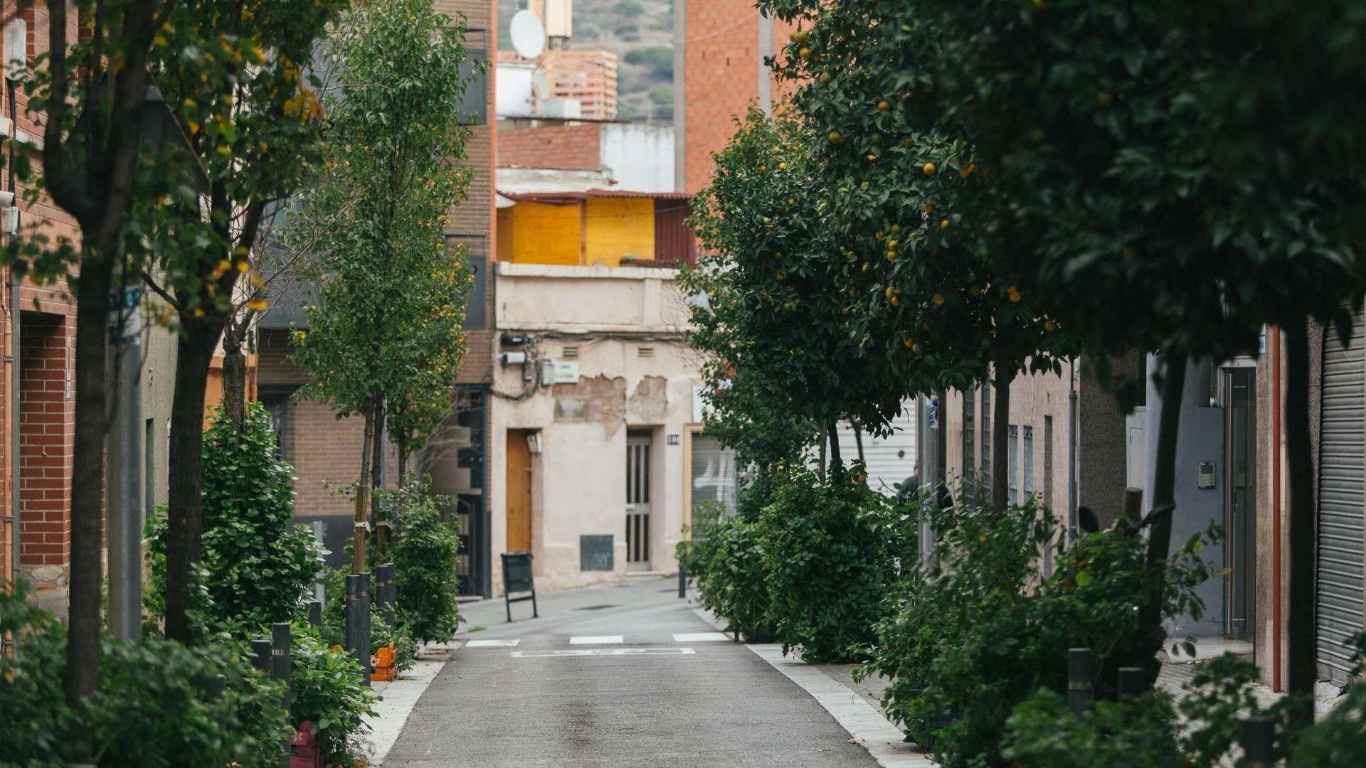 carrer de trinitat vella buit amb arbres