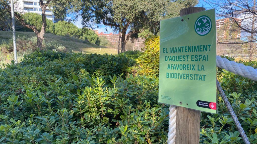 Plantes espai biodiversitat