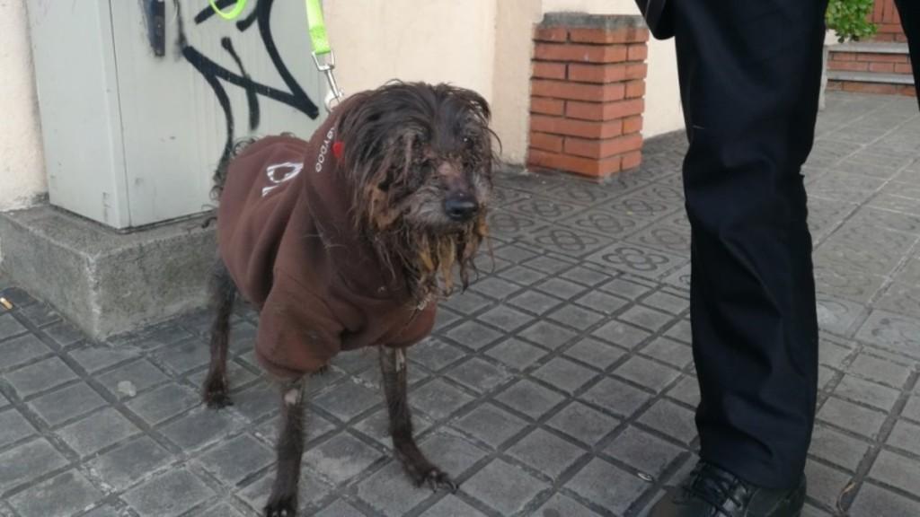 gos rescatat per la Guàrdia Urbana