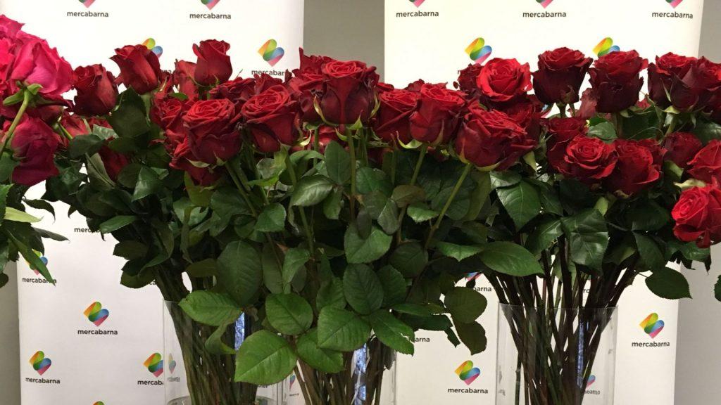 varietats roses Sant Jordi 2021: freedom-red naomi-cupido